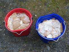 Making Mushroom Spawn with Cardboard