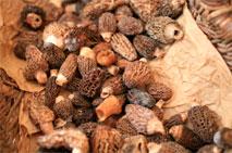 Edible mushrooms being dried - morels