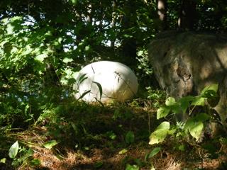 Giant puffball mushroom in Ontario