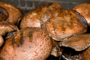 grilled portobello marinated mushroom recipe