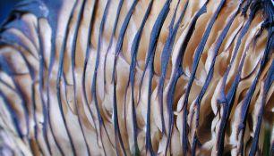 identify mushrooms - gills