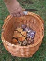 identifying mushrooms