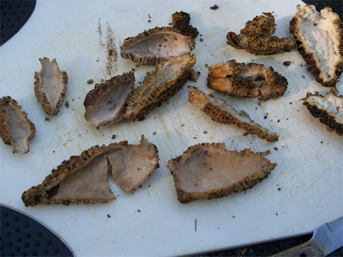 Morels sliced in half