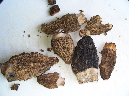 Morels on a cutting board