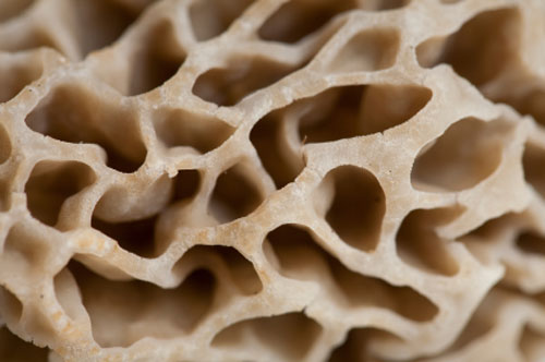 Close up of a morel mushroom cap
