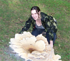 Mushroom Identification - Berkelely's Polypore