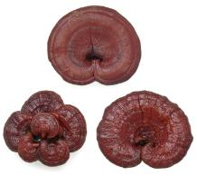 Dried Ganoderma lucidum